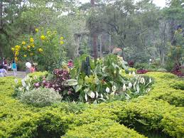 flowers garden city baguio botanical garden baguio city philippines personal