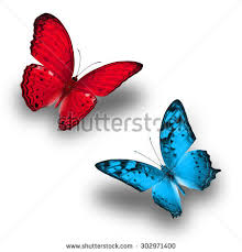 colorful butterfly butterfly light blue stock photo 302971400