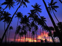 38 palm trees wallpaper