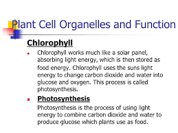 which plant cell organelle uses light energy to produce sugar plant and animal cell organelles and functions ppt video online