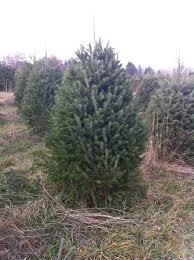 christmas tree a greene u0027s adventures