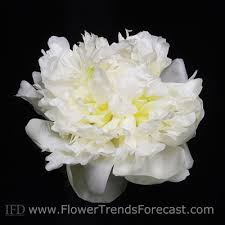 www flowers flower trends forecast trends