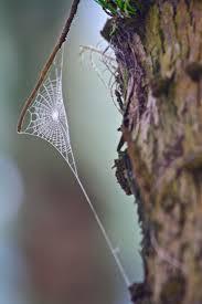 halloween spider webbing transparent background 232 best web medicine spider webs attract pollutants u0026 naturally