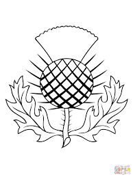 the thistle of scotland coloring page free printable coloring pages