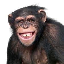 Monkey Meme - mytalk 107 1 everything entertainment st paul minneapolis i