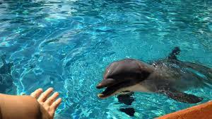seaworld orlando ends feeding dolphins orlando sentinel