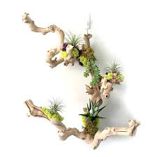 hanging air plant air plant wall wall hanging air plant holder realvalladolid club