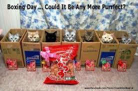 Boxing Day Meme - boxing day meme cute cats pinterest