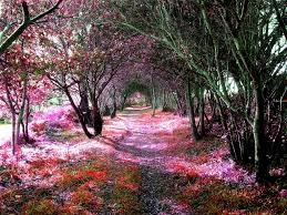 25 glamorous and completely bewitching tree tunnels that will make