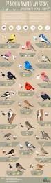 22 popular north american birds infographic infographic bird