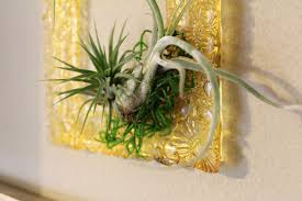 Air Plants This Diy Resin Frame For Displaying Air Plants