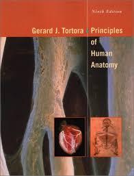 Principles Of Anatomy And Physiology 13th Edition Tortora Principles Of Human Anatomy By Gerard J Tortora