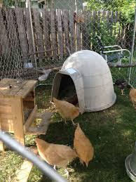 Large Igloo Dog House Need Coop Backyard Chickens