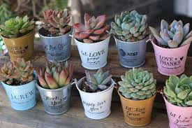 party favors wedding wedding succulents succulent wedding favors succulents for sale