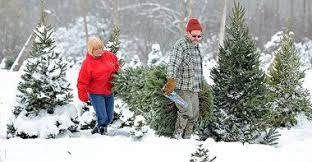 where to cut your own christmas tree in central ny syracuse com