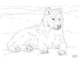 polar fox clipart arctic wolf pencil and in color polar fox