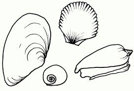 seashell coloring pages bestofcoloring com