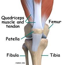 Knee Bony Anatomy Bipartite Patella Eorthopod Com