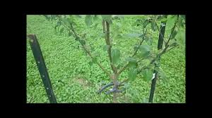 the start of my new fruit tree orchard youtube