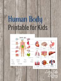 free human body printable for kids human body bodies and sons