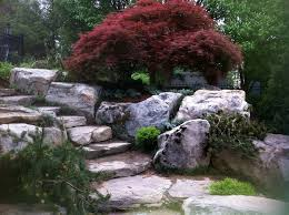 japanese maples the epitome of style and grace merrifield