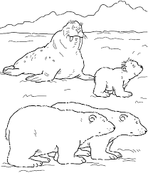 coloring pictures bear