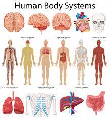 Human Shoulder Diagram Anatomy Vectors Photos And Psd Files Free Download