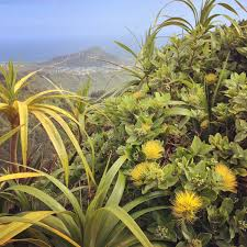 native hawaiian medicinal plants hawaiian plants