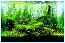Aquascape Layout Let S Start With Q Layout Creation Aquascaping Wiki