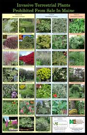 33 best plants for birds gardeners be aware u2014 popular species among list of invasive