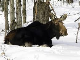 Vermont wild animals images 120 best i love vermont images vermont water jpg