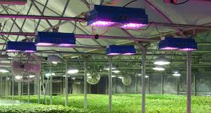 commercial led grow lights going green to stay in the black greenhouse product news
