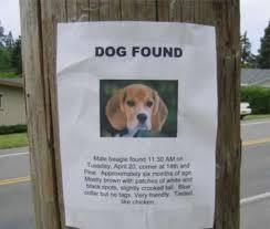 Lost Dog Meme - 20 hilarious lost pet signs blazepress