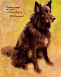 belgian sheepdog tattoo 56 best belgians images on pinterest belgian shepherd german