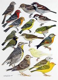 Hawaii birds images Hawaiian birds to the birds of hawaii and the tropical jpg
