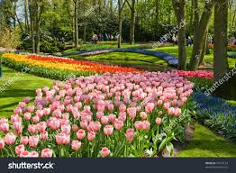 keukenhof flower gardens keukenhof largest flower garden europe holland stock photo