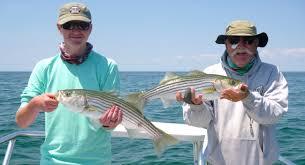 cape cod bay fishing report u2013 may 5 2016 u2013 salty cape