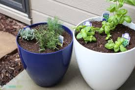How To Build An Herb Garden How To Make A Potted Herb Garden
