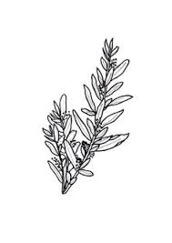 olive branches to symbolize peace tats u0026 piercings pinterest