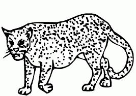 cheetah pictures print kids coloring