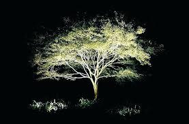 Led Landscape Tree Lights Exterior Led Landscape Lighting Extraordinary Low Voltage Led