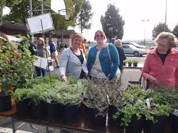 49 best california native plants 2016 native plant sale cnps slo