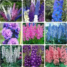delphinium flowers aliexpress buy bellfarm different types of delphinium