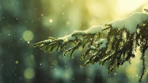 snowy tree bokeh hd wallpaper fullhdwpp hd wallpapers