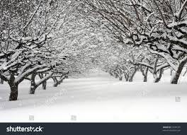 apple orchard winter snowstorm stock photo 53395375 shutterstock