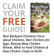Guide To Raising Backyard Chickens by Chickens 101 Archives Countryside Network