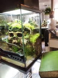 best 25 tropical terrariums ideas on pinterest guide terraria