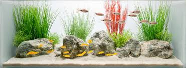 freshwater aquarium fish groups home aquarium fish sub group