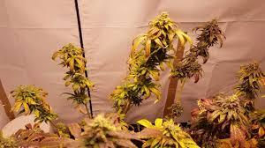 living organic indoor flower garden youtube