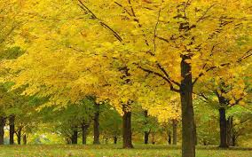 field trees landscape alley nature forest yellow beautiful autumn